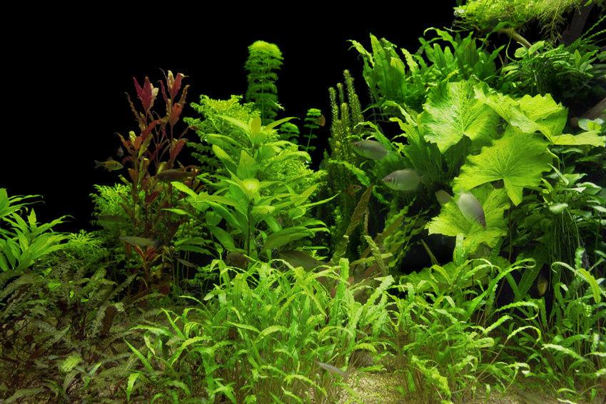 Bepflanzung und Dekoration