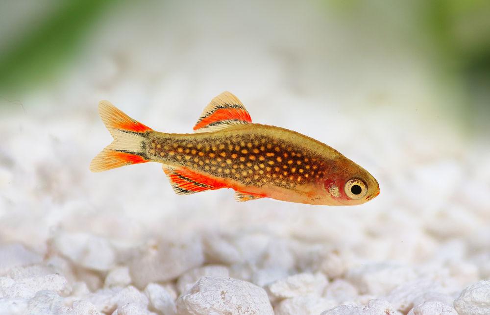 Fische im Nano Aquarium